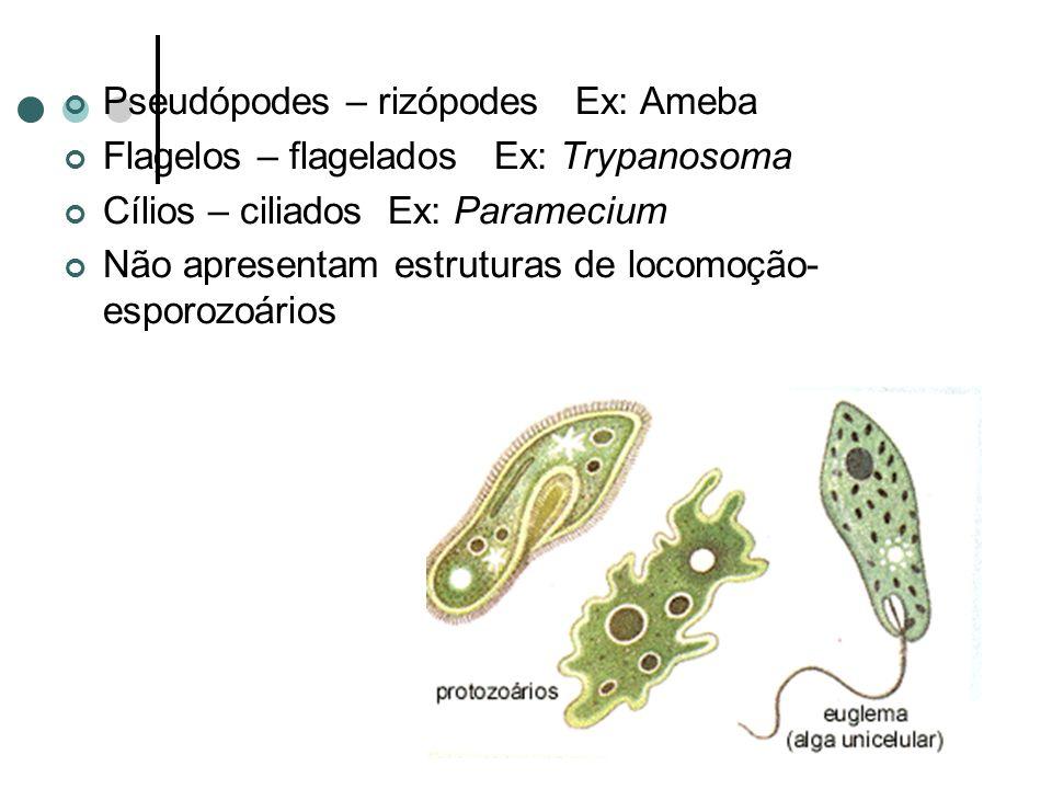 Pseudópodes – rizópodes Ex: Ameba