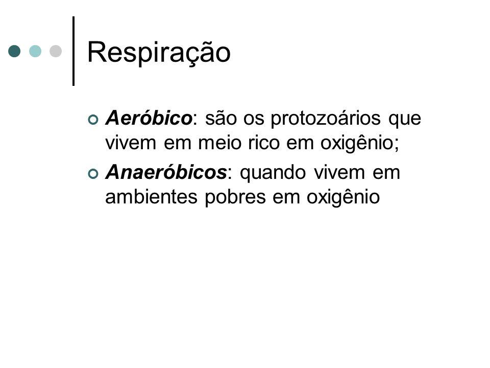 Respiração Aeróbico: são os protozoários que vivem em meio rico em oxigênio; Anaeróbicos: quando vivem em ambientes pobres em oxigênio.