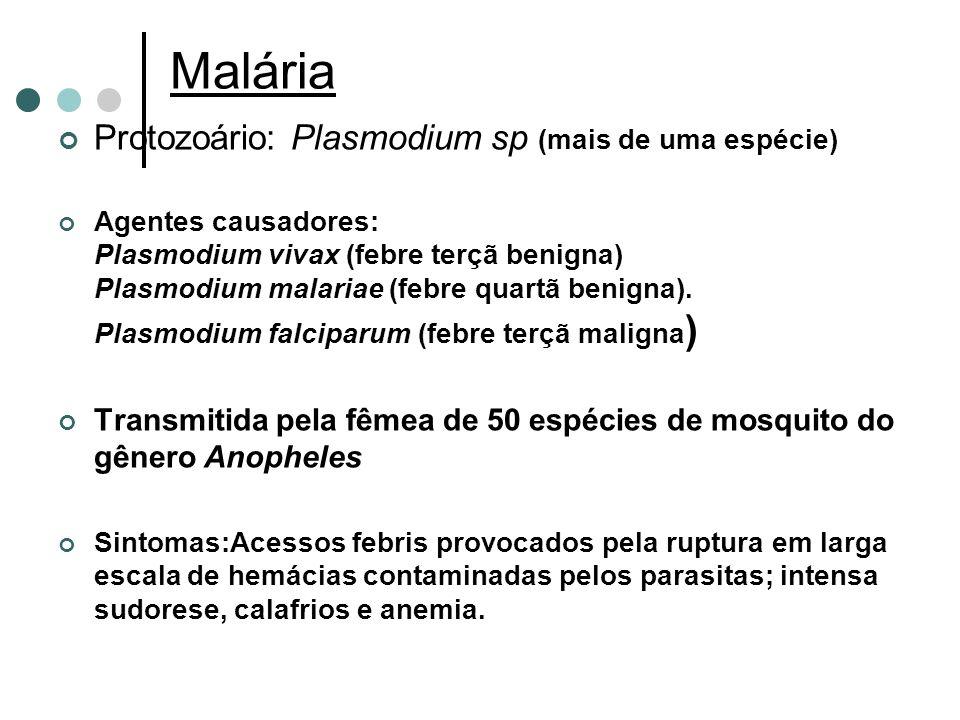Malária Protozoário: Plasmodium sp (mais de uma espécie)