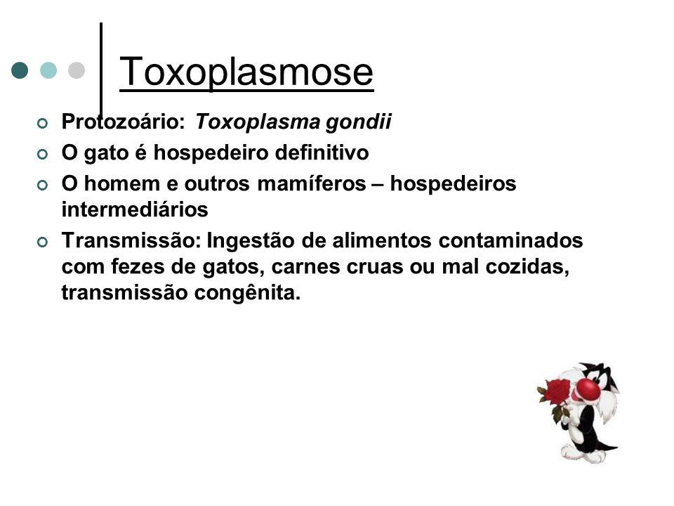 Toxoplasmose Protozoário: Toxoplasma gondii
