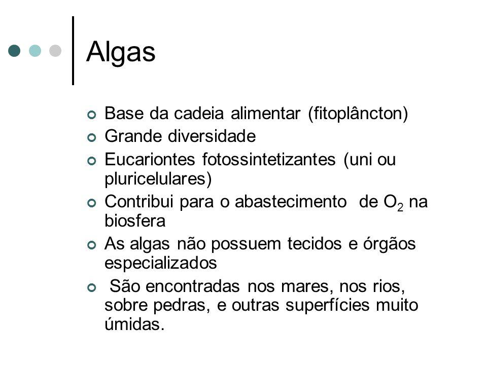 Algas Base da cadeia alimentar (fitoplâncton) Grande diversidade