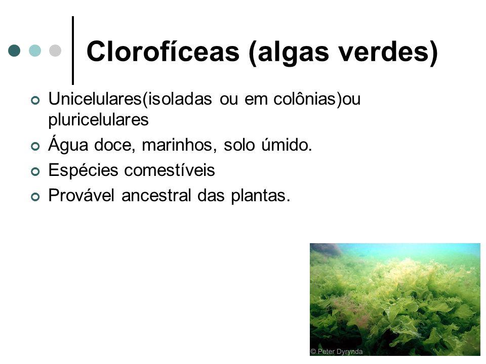 Clorofíceas (algas verdes)