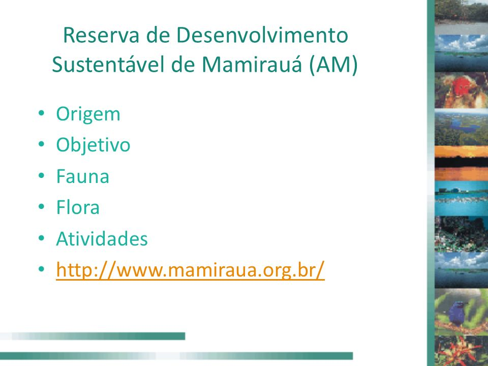 Reserva de Desenvolvimento Sustentável de Mamirauá (AM)