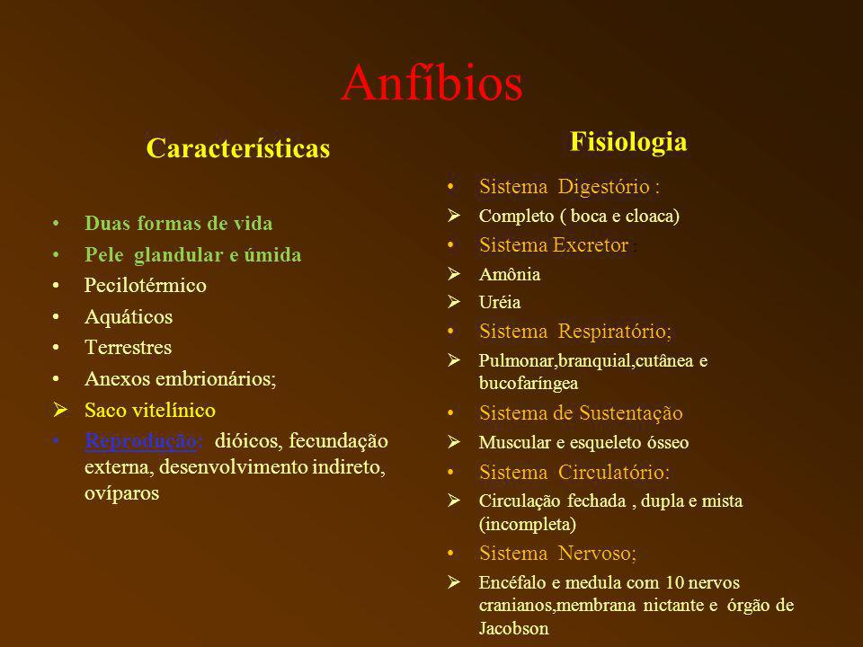 Anfíbios Fisiologia Características Sistema Digestório :