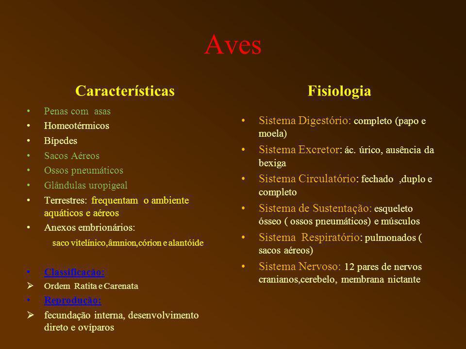 Aves Características Fisiologia