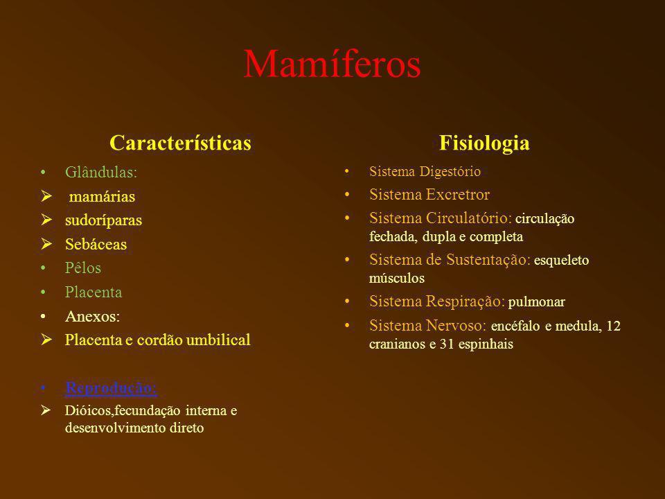 Mamíferos Características Fisiologia Glândulas: mamárias