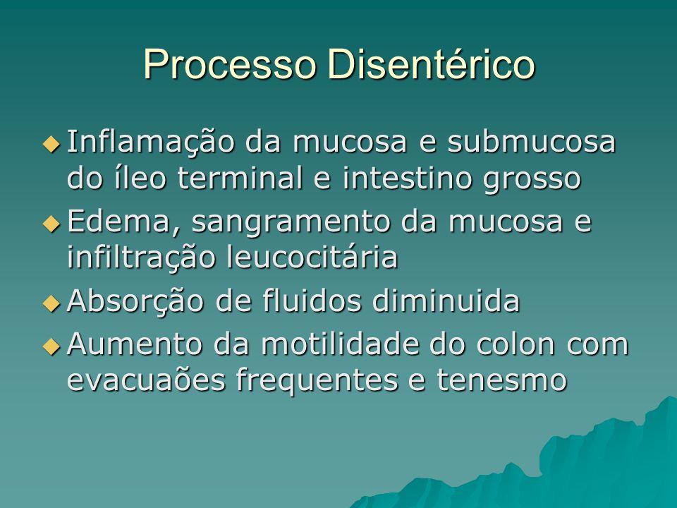 Processo Disentérico Inflamação da mucosa e submucosa do íleo terminal e intestino grosso. Edema, sangramento da mucosa e infiltração leucocitária.