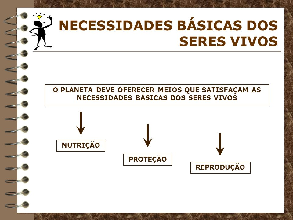 NECESSIDADES BÁSICAS DOS SERES VIVOS