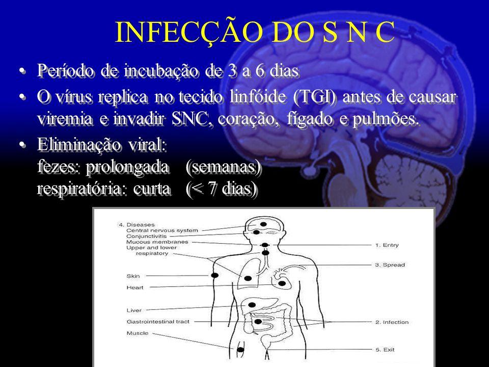 INFECÇÃO DO S N C Período de incubação de 3 a 6 dias