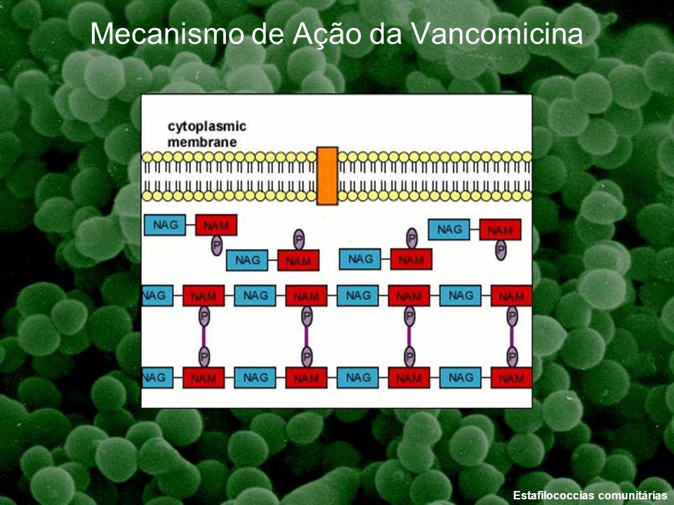 Mecanismo de Ação da Vancomicina