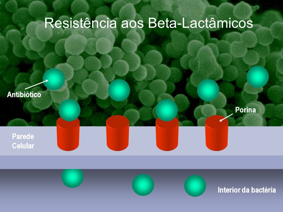 Resistência aos Beta-Lactâmicos