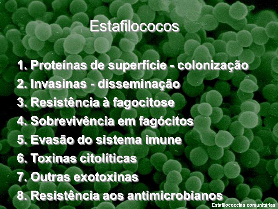 Estafilococos 1. Proteínas de superfície - colonização