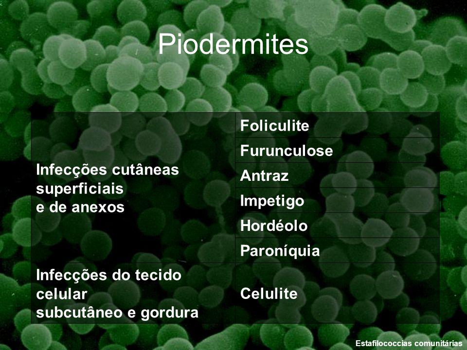 Piodermites Infecções cutâneas superficiais Foliculite e de anexos