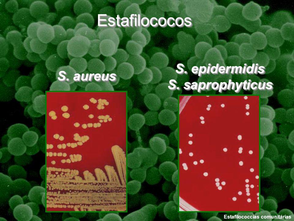 Estafilococos S. epidermidis S. saprophyticus S. aureus