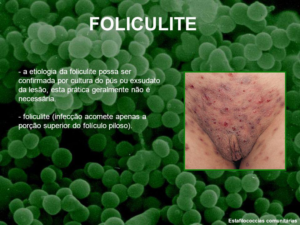 FOLICULITE - a etiologia da foliculite possa ser confirmada por cultura do pús ou exsudato da lesão, esta prática geralmente não é necessária.
