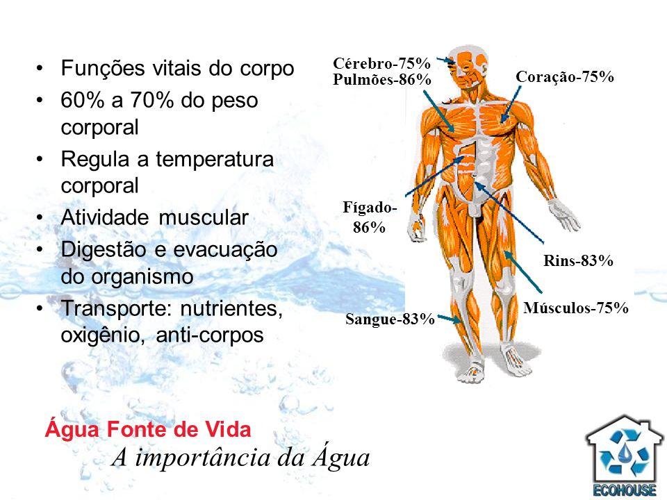A importância da Água Funções vitais do corpo