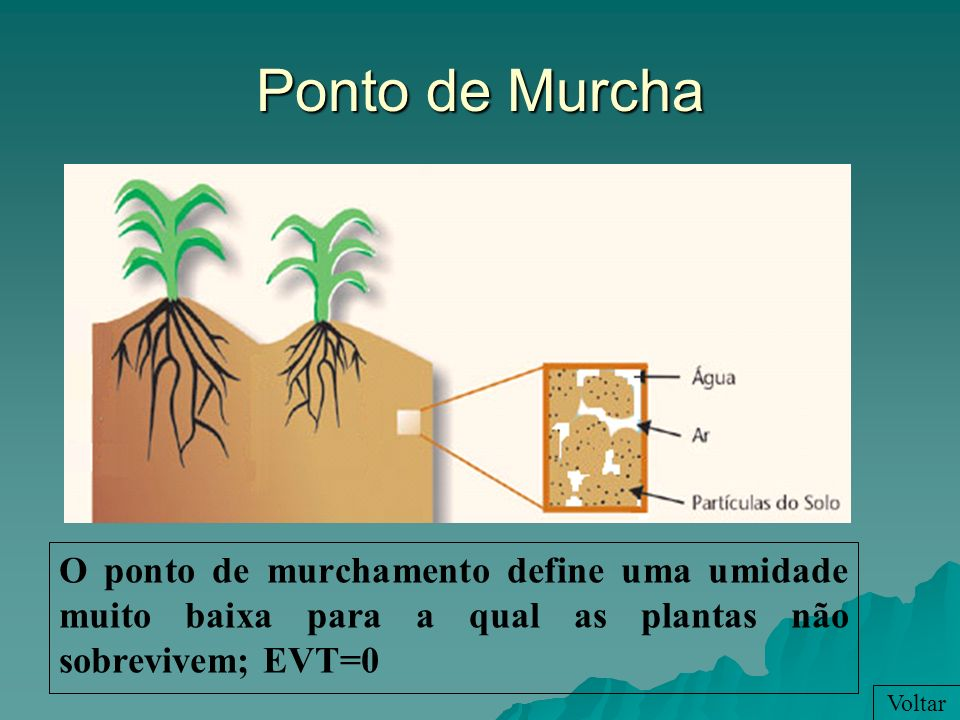 Ponto de Murcha O ponto de murchamento define uma umidade muito baixa para a qual as plantas não sobrevivem; EVT=0.