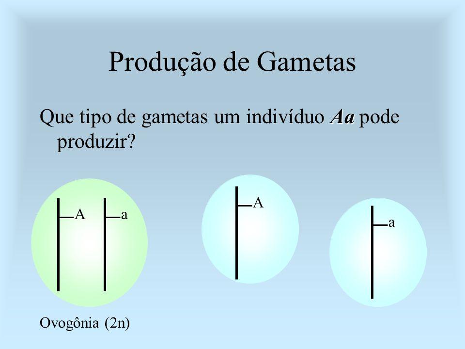 Produção de Gametas Que tipo de gametas um indivíduo Aa pode produzir