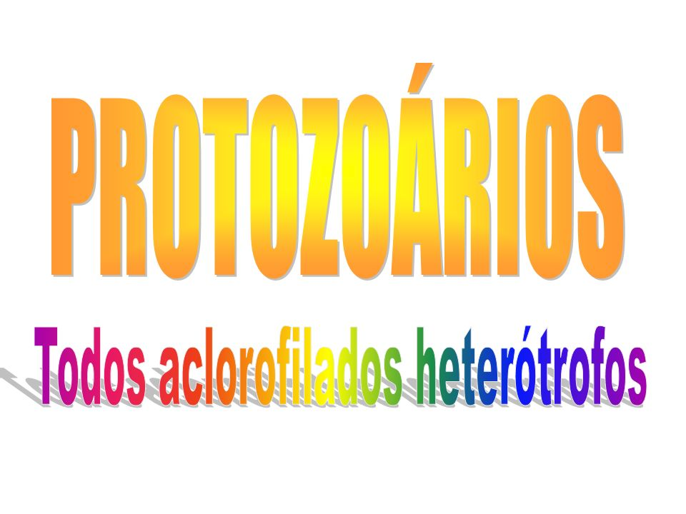 Todos aclorofilados heterótrofos