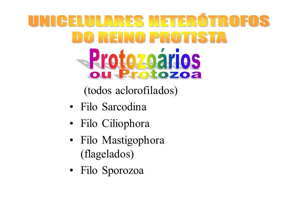UNICELULARES HETERÓTROFOS