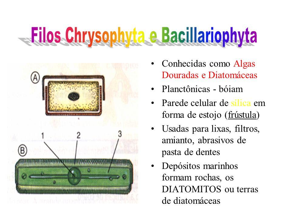 Filos Chrysophyta e Bacillariophyta