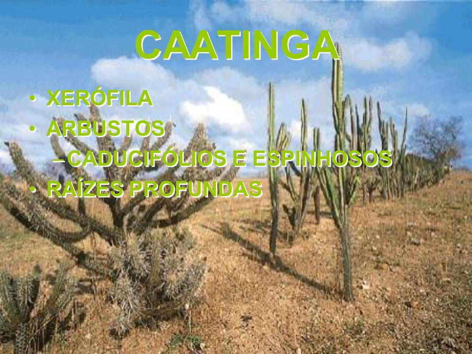 CAATINGA XERÓFILA ARBUSTOS CADUCIFÓLIOS E ESPINHOSOS RAÍZES PROFUNDAS
