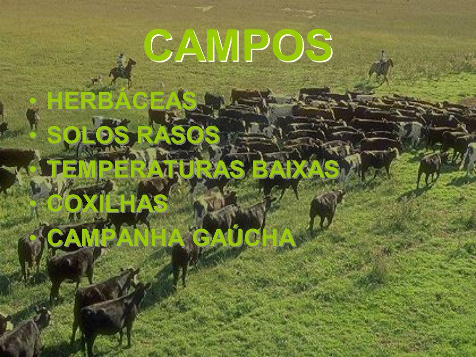 CAMPOS HERBÁCEAS SOLOS RASOS TEMPERATURAS BAIXAS COXILHAS