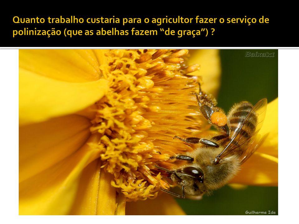 Quanto trabalho custaria para o agricultor fazer o serviço de polinização (que as abelhas fazem de graça )