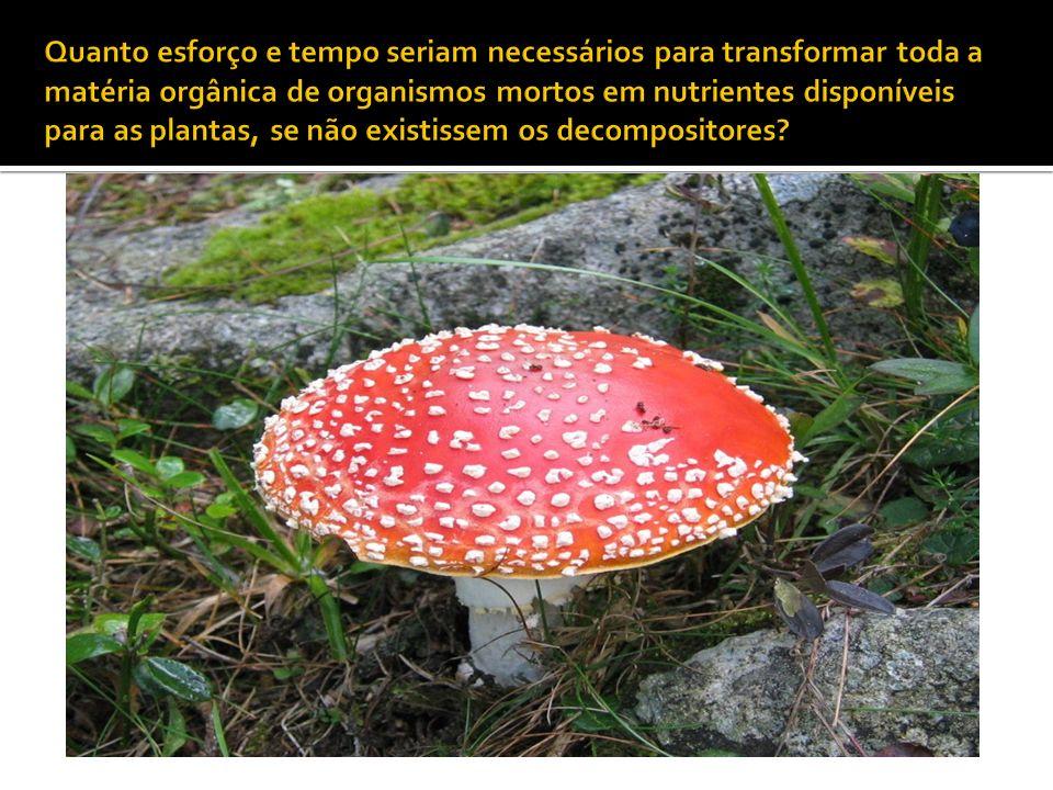 Quanto esforço e tempo seriam necessários para transformar toda a matéria orgânica de organismos mortos em nutrientes disponíveis para as plantas, se não existissem os decompositores