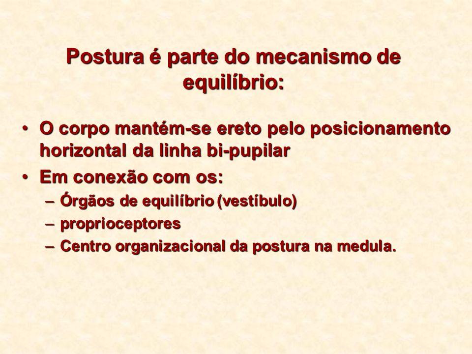 Postura é parte do mecanismo de equilíbrio: