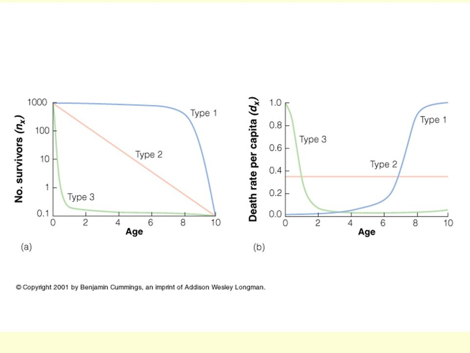 This figure shows the three types of survivorship curves, one as no