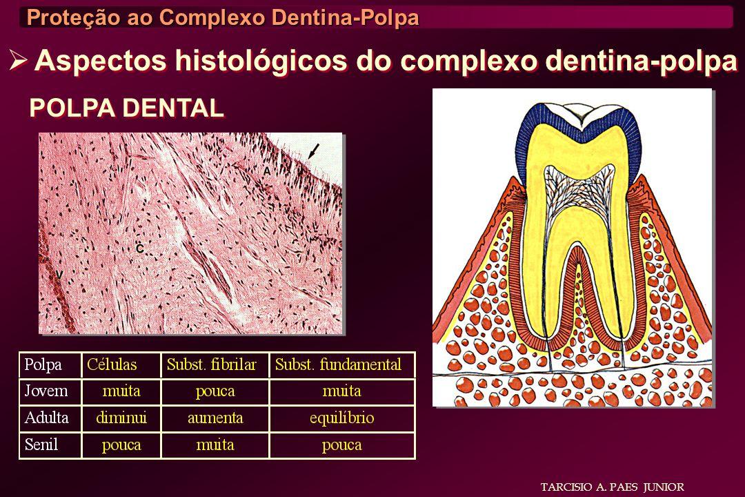 Aspectos histológicos do complexo dentina-polpa