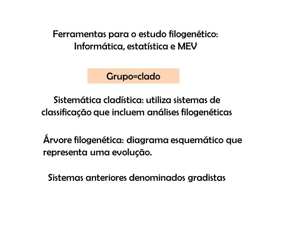 Ferramentas para o estudo filogenético: Informática, estatística e MEV