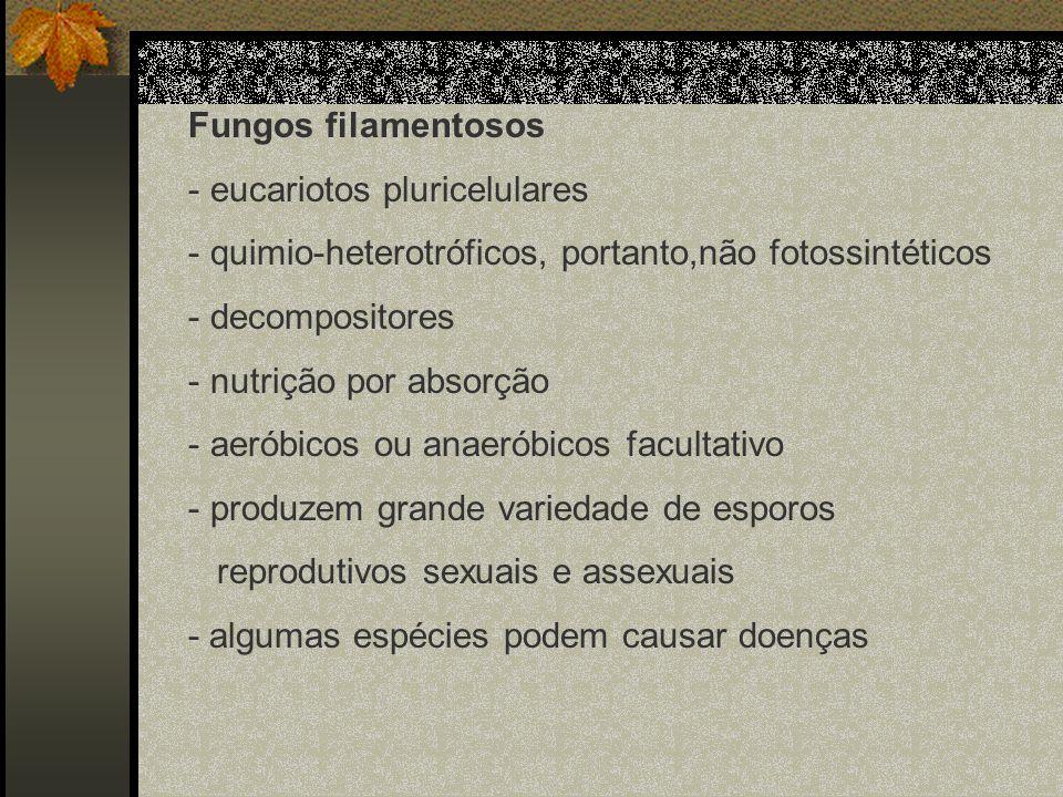 Fungos filamentososeucariotos pluricelulares. quimio-heterotróficos, portanto,não fotossintéticos. decompositores.