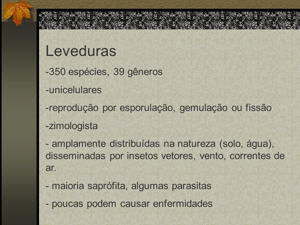 Leveduras 350 espécies, 39 gêneros unicelulares