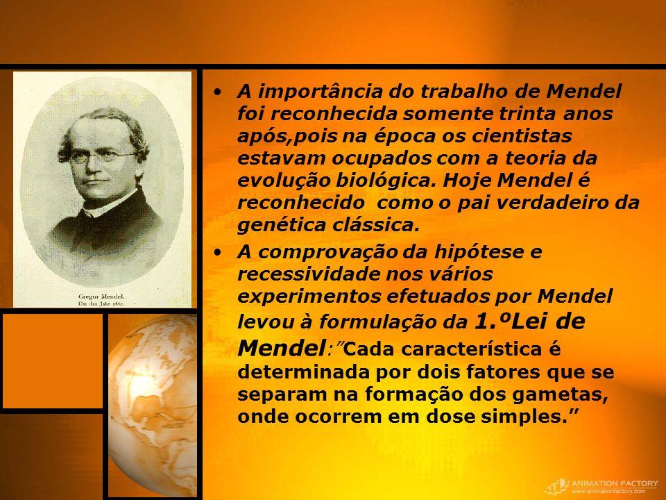 A importância do trabalho de Mendel foi reconhecida somente trinta anos após,pois na época os cientistas estavam ocupados com a teoria da evolução biológica. Hoje Mendel é reconhecido como o pai verdadeiro da genética clássica.