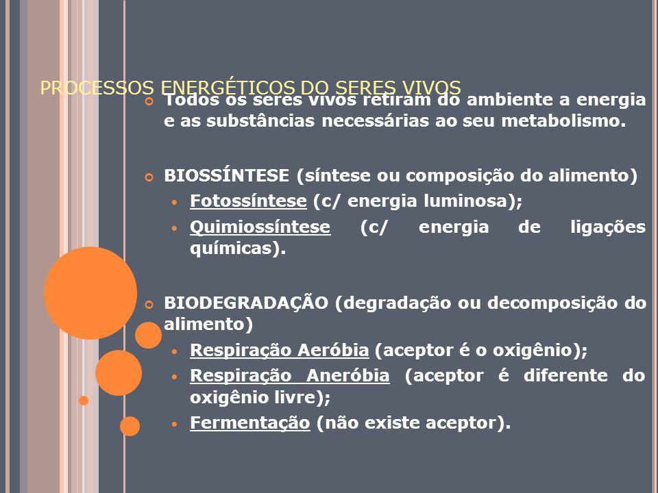 PROCESSOS ENERGÉTICOS DO SERES VIVOS