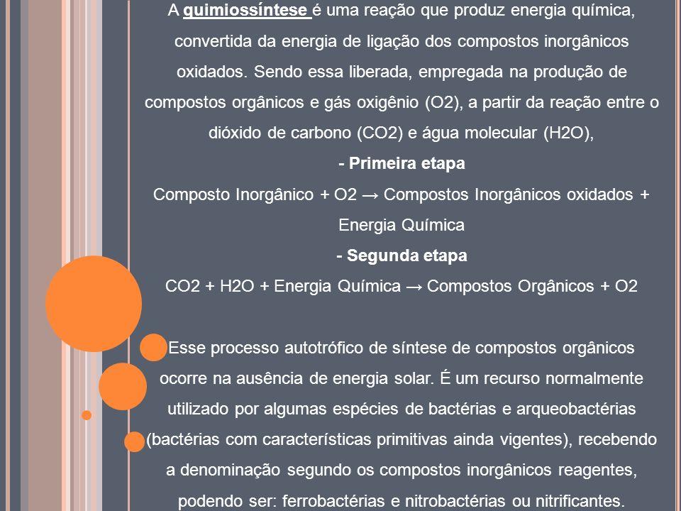CO2 + H2O + Energia Química → Compostos Orgânicos + O2