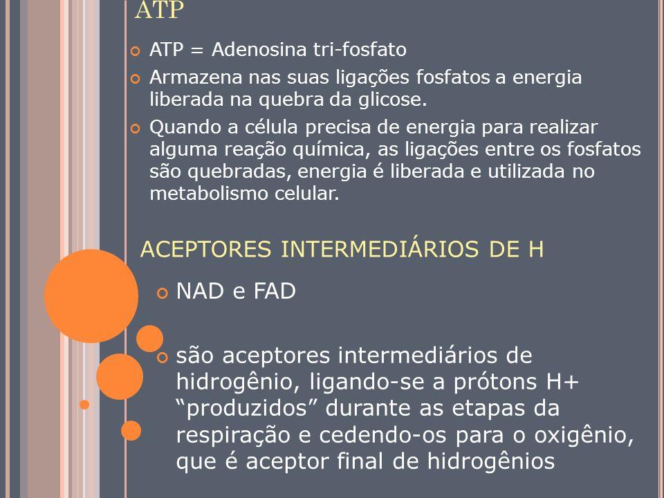 ATP ACEPTORES INTERMEDIÁRIOS DE H NAD e FAD