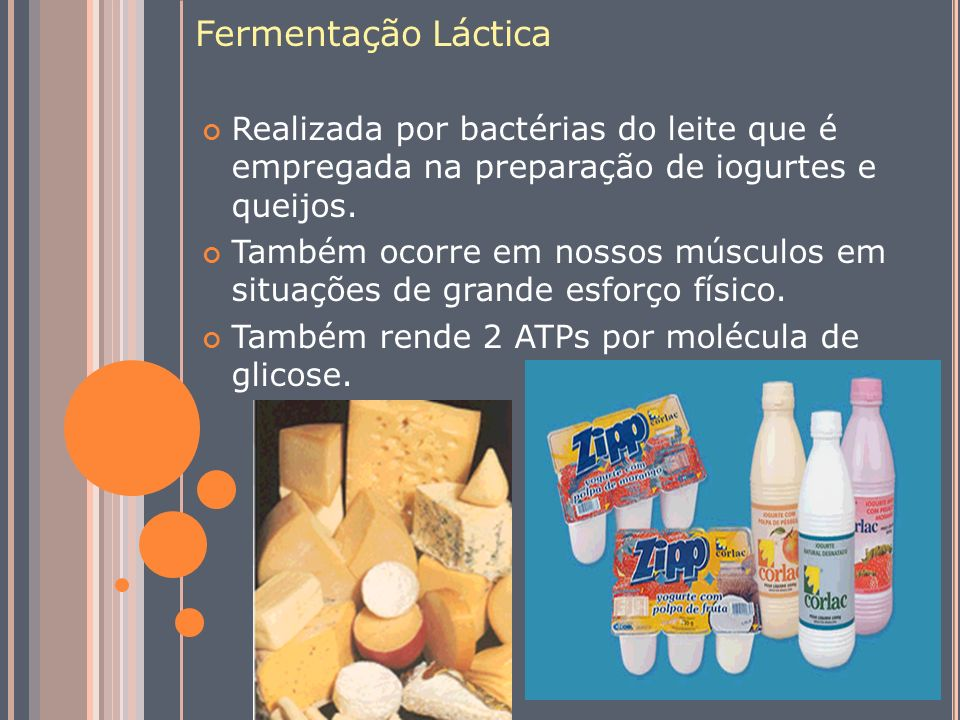 Fermentação Láctica Realizada por bactérias do leite que é empregada na preparação de iogurtes e queijos.