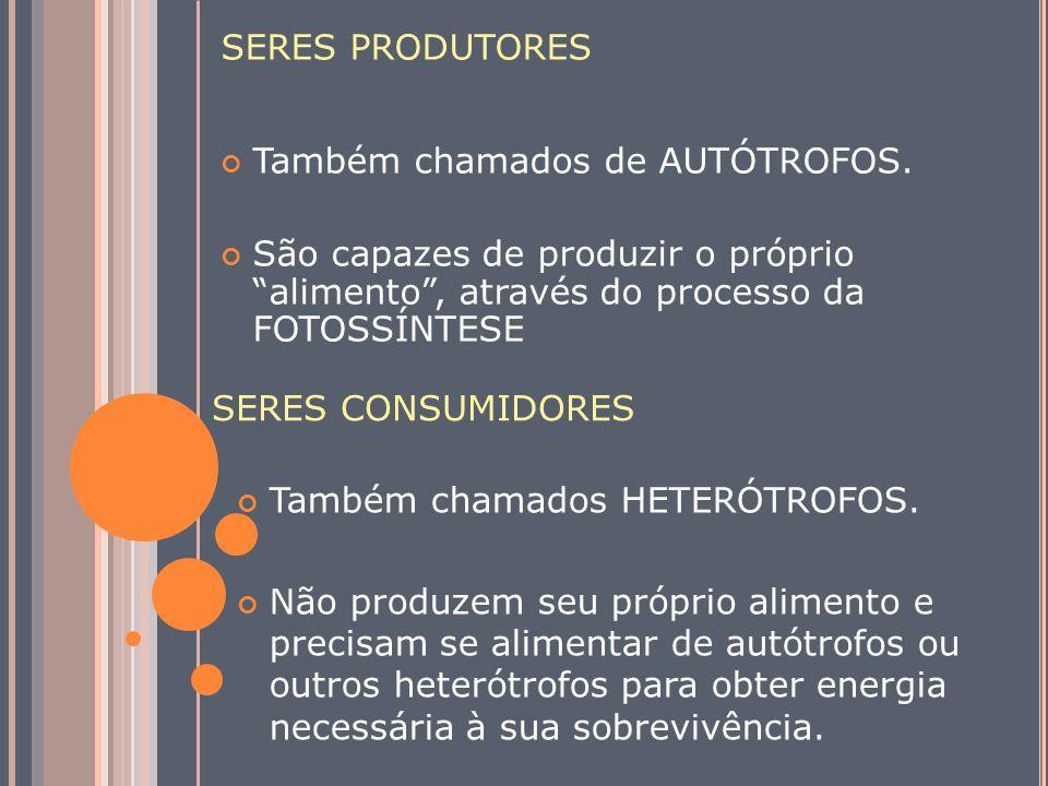 SERES PRODUTORES Também chamados de AUTÓTROFOS. São capazes de produzir o próprio alimento , através do processo da FOTOSSÍNTESE.