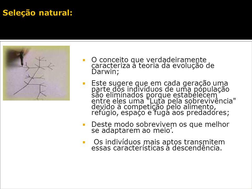 Seleção natural:O conceito que verdadeiramente caracteriza a teoria da evolução de Darwin;