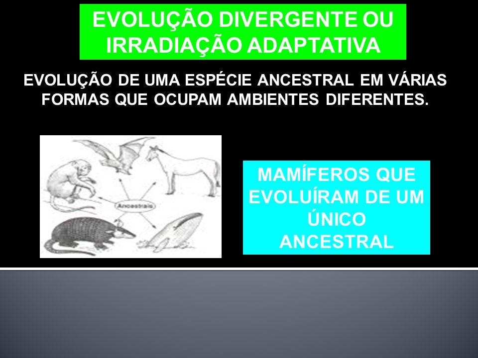 EVOLUÇÃO DIVERGENTE OU IRRADIAÇÃO ADAPTATIVA