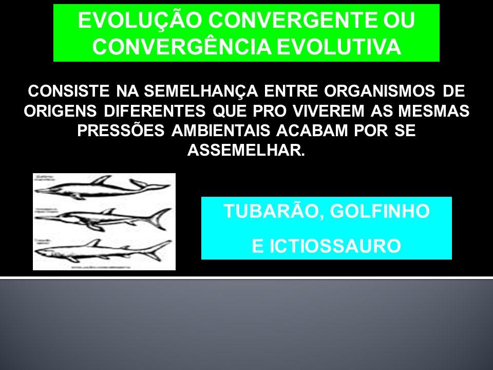 EVOLUÇÃO CONVERGENTE OU CONVERGÊNCIA EVOLUTIVA