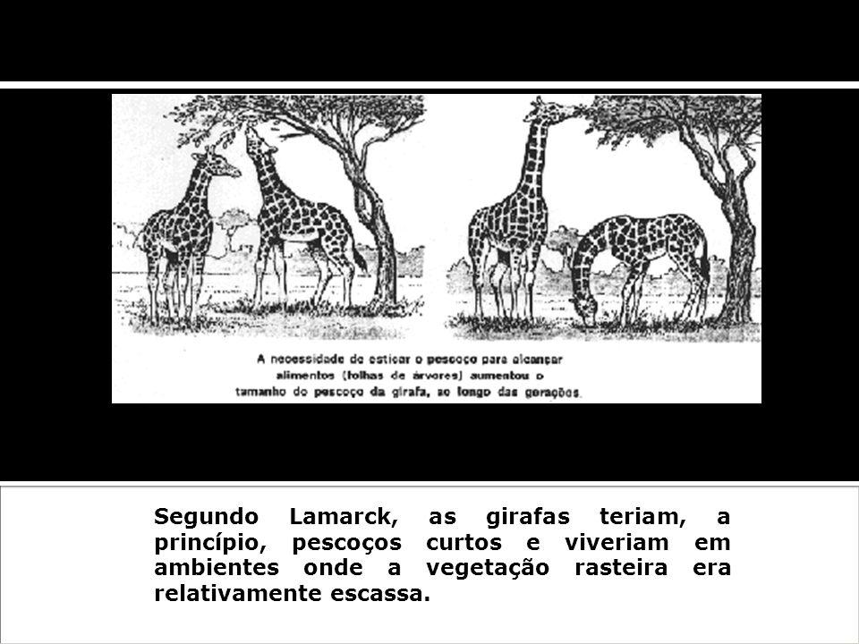 ExemploSegundo Lamarck, as girafas teriam, a princípio, pescoços curtos e viveriam em ambientes onde a vegetação rasteira era relativamente escassa.