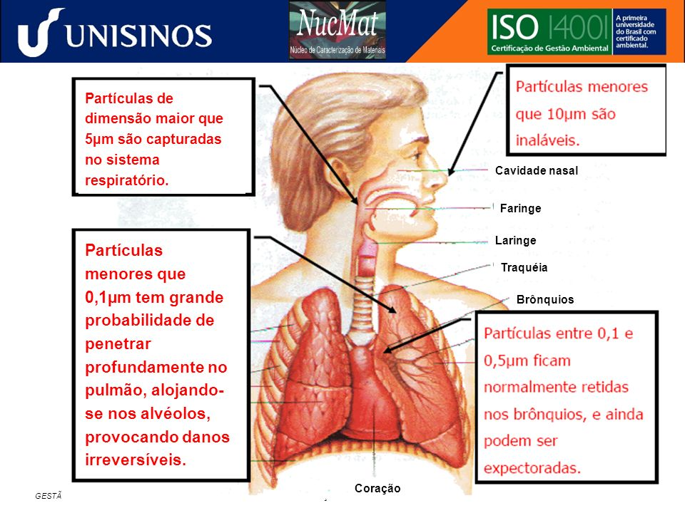 Partículas de dimensão maior que 5µm são capturadas no sistema respiratório.