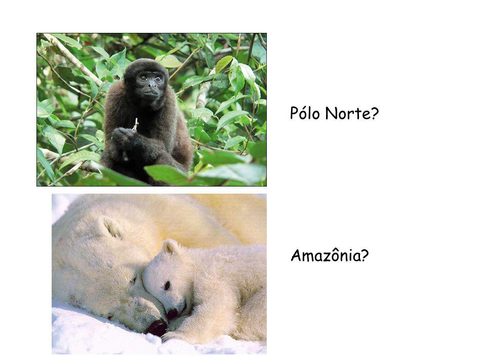 Pólo Norte Amazônia