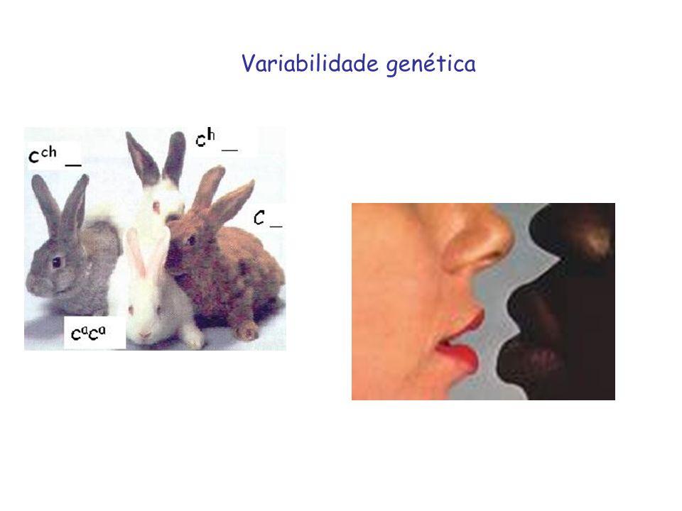Variabilidade genética