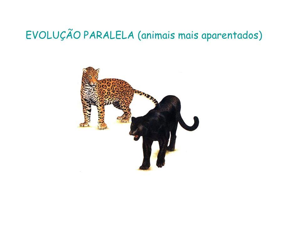 EVOLUÇÃO PARALELA (animais mais aparentados)