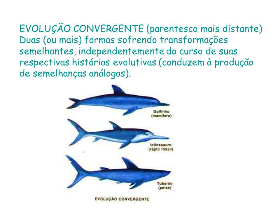 EVOLUÇÃO CONVERGENTE (parentesco mais distante)